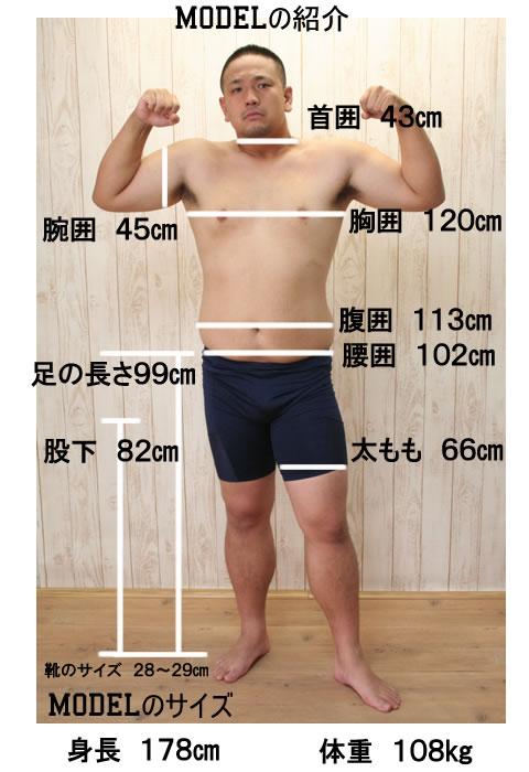 モデル サイズ表示